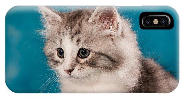 Cat iPhone Case - Sibirian Cat Kitten by Doreen Zorn