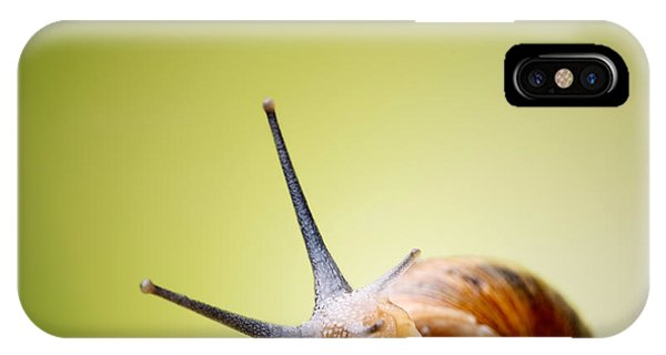 Plant iPhone Case - Snail On Green Stem by Johan Swanepoel