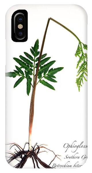 Southern Grape Fern IPhone Case