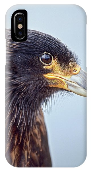 Albatross iPhone Case - Striated Caracara Or Johnny Rook by Martin Zwick