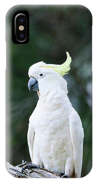 Cockatoo iPhone Case - Sulfur-crested Cockatoo (cacatua by Martin Zwick