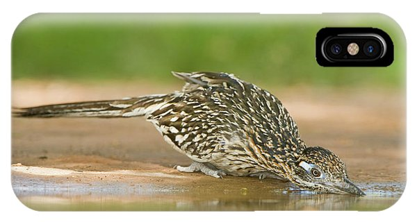 Greater Roadrunner iPhone Case - Usa, Texas, Rio Grande Valley by Jaynes Gallery
