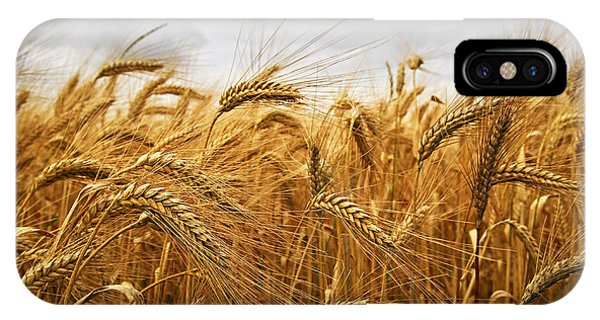 Rural Scenes iPhone X / XS Case - Wheat by Elena Elisseeva