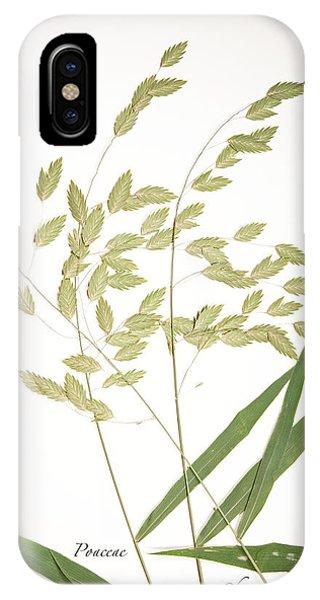 Wild Oats IPhone Case