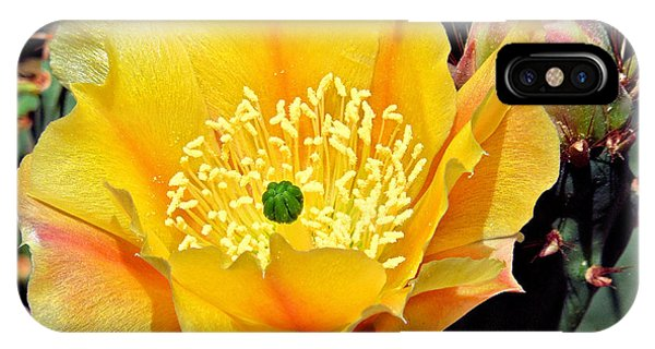 Yellow Cactus Bloom  IPhone Case