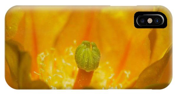 Yellow Prickly Pear Bloom Phone Case by T C Brown