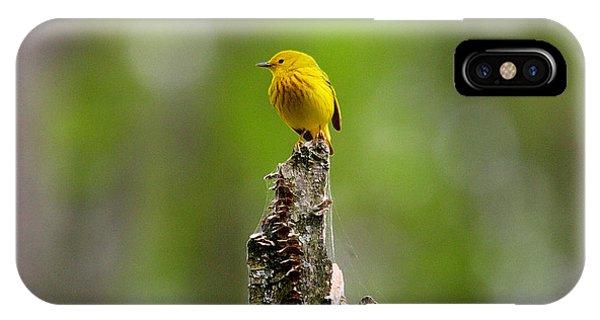 Yellow Warbler IPhone Case