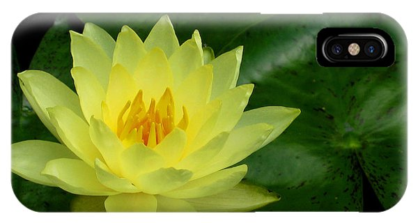Yellow Waterlily Flower IPhone Case