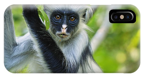 East Africa iPhone Case - Zanzibar Red Colobus In Tree Jozani by Thomas Marent