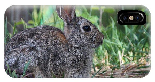 2010 Rabbit IPhone Case