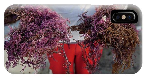 Alga iPhone X Case - 2015 Agar Seaweed Algae Coastal Farming by Paul D Stewart