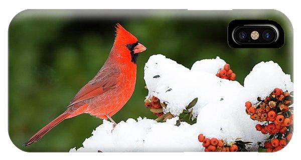 Scarlet iPhone Case - Northern Cardinal (cardinalis Cardinalis by Richard and Susan Day