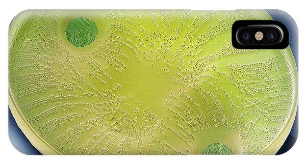 Diatom IPhone Case