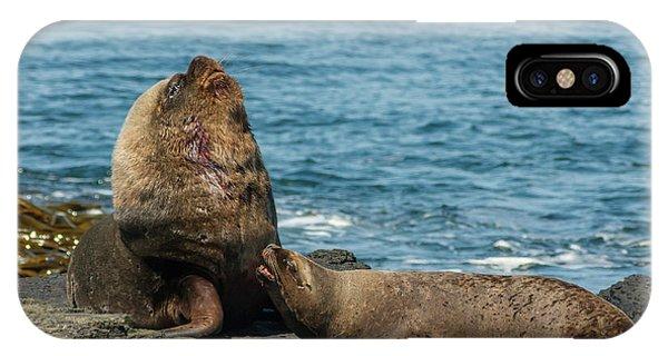 Falkland Islands, Bleaker Island Phone Case by Jaynes Gallery