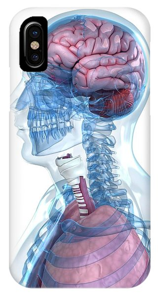 Head Anatomy Phone Case by Sciepro/science Photo Library