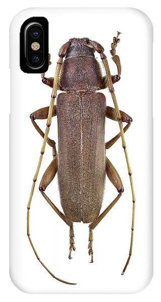 Longhorn Beetle Phone Case by F. Martinez Clavel