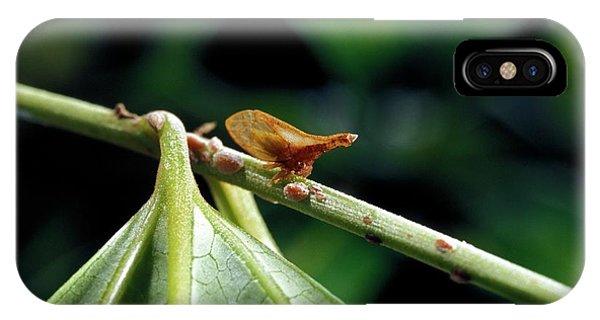 Treehopper Phone Case by Patrick Landmann/science Photo Library