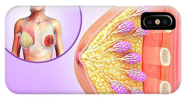 Female Breast Anatomy Phone Case by Pixologicstudio/science Photo Library