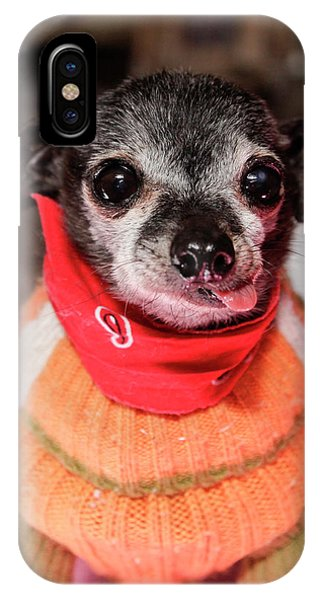 Chihuahua iPhone Case - Santa Fe, New Mexico, United States by Julien Mcroberts
