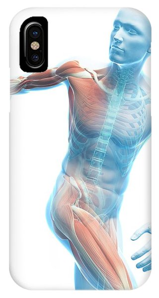 Male Musculature Phone Case by Sciepro/science Photo Library