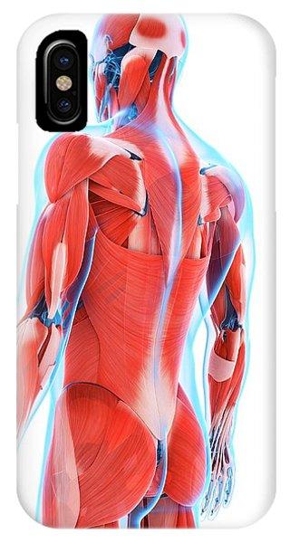 Human Back Muscles Phone Case by Sebastian Kaulitzki