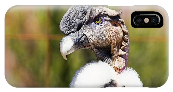 Andean Condor Phone Case by Philippe Psaila/science Photo Library
