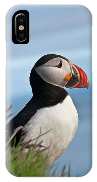 Atlantic Puffin (fratercula Arctica by Keren Su