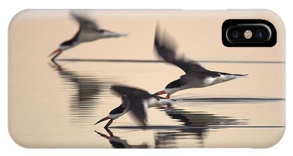 3 Black Skimmers  382z3059 IPhone Case