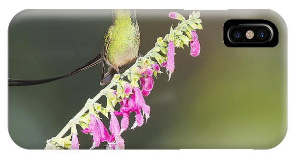 Black-tailed Train Bearer Hummingbird IPhone Case