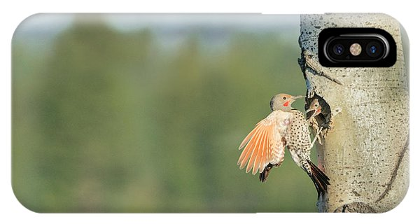 Northern Flicker iPhone Case - Canada, British Columbia by Gary Luhm