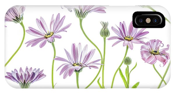 Daisy iPhone Case - Cape Daisies by Mandy Disher