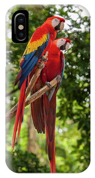 Macaw iPhone Case - Central America, Honduras, Roatan by Jim Engelbrecht