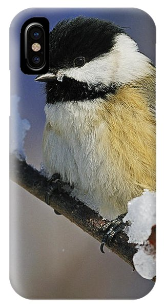 Winter Chickadee... IPhone Case