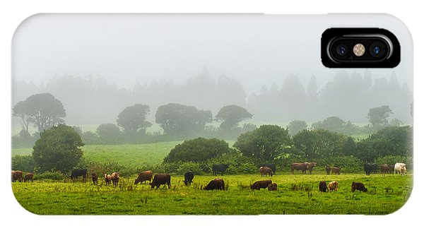 Cows At Rest IPhone Case