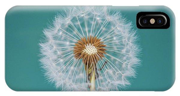 Teal iPhone Case - Dandelion by Bess Hamiti