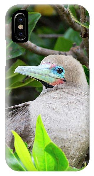 Boobies iPhone Case - Ecuador, Galapagos Islands, Genovesa by Ellen Goff