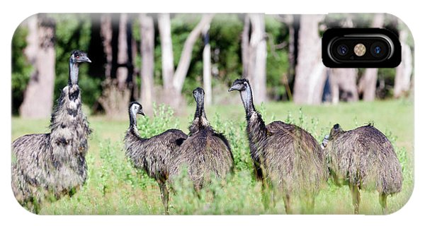 Emu (dromaius Novaehollandiae IPhone Case