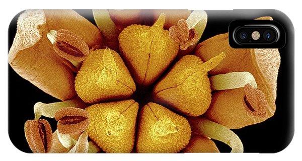 Stamen iPhone Case - Flower by Susumu Nishinaga