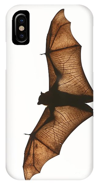 Flying Fox IPhone Case