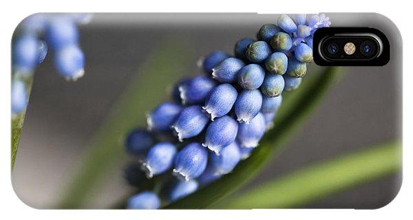Grape iPhone X Case - Grape Hyacinth by Nailia Schwarz