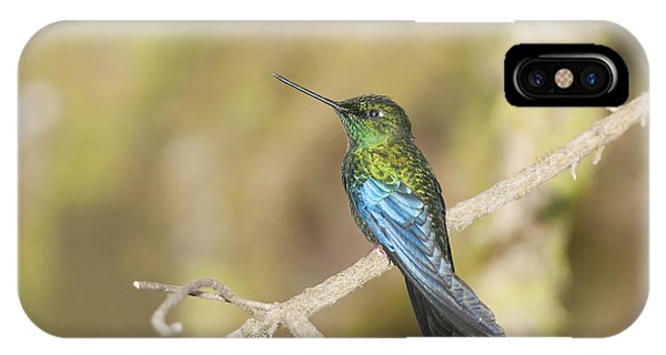 Great Sapphirewing Hummingbird IPhone Case