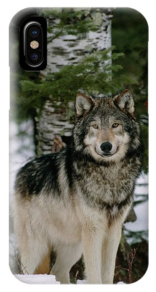 Grey Wolf Phone Case by William Ervin/science Photo Library
