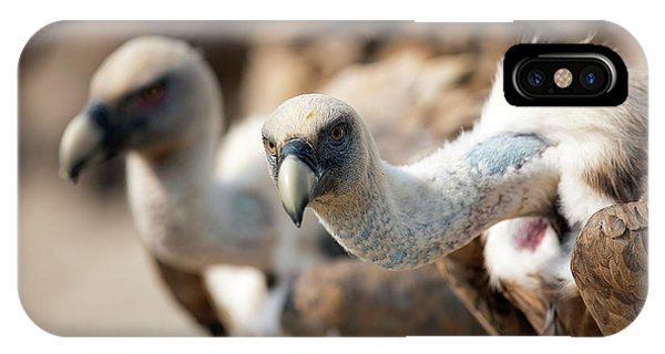 Griffon Vultures IPhone Case