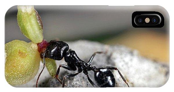 Behaviour iPhone Case - Harvester Ant by Frank Fox