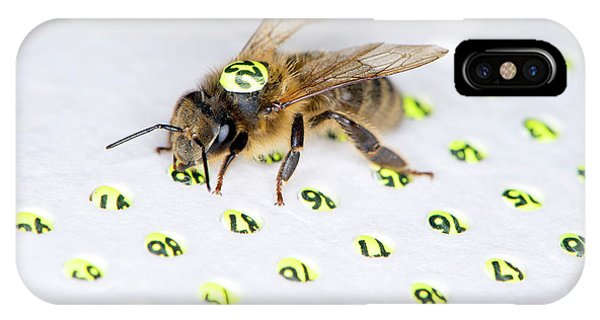 Honeybee iPhone X Case - Honeybee Radar Tagging by Louise Murray