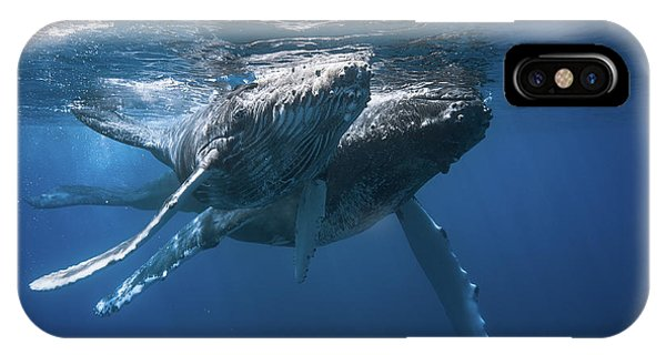 Baby Blue iPhone Case - Humpback Whale by Barathieu Gabriel