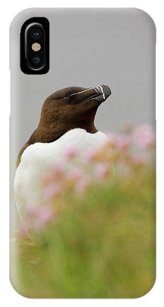 Razorbill iPhone Case - Iceland, Latrabjarg by Jaynes Gallery