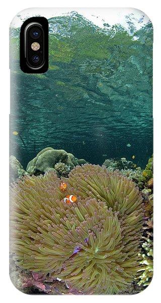 Indian Ocean, Indonesia, Raja Ampat IPhone Case