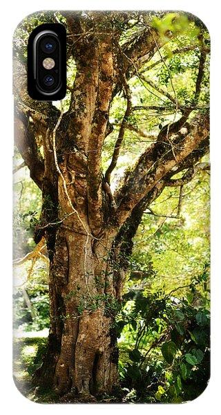 Kingdom Of The Trees. Peradeniya Botanical Garden. Sri Lanka IPhone Case