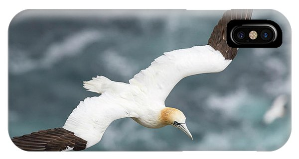 Northern Scotland iPhone Case - Northern Gannet (morus Bassanus by Martin Zwick